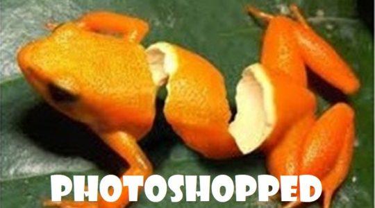 """Photoshopped Gospel"""